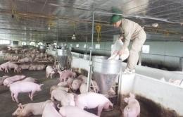 Điểm mới của Luật chăn nuôi số 32/2018/QH14