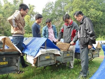 VinaCert chứng nhận VietGAP chăn nuôi ong an toàn cho Cơ sở ong mật Vinh Hoa