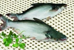 Tổng cục Thủy sản chỉ định VinaCert là tổ chức chứng nhận VietGAP thủy sản