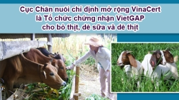Cục Chăn nuôi chỉ định mở rộng VinaCert là Tổ chức chứng nhận VietGAP cho bò thịt, dê sữa và dê thịt