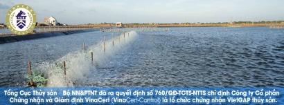 Tổng cục Thủy sản chỉ định VinaCert là Tổ chức chứng nhận VietGAP trong nuôi trồng thủy sản