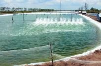 VietGAP thủy sản