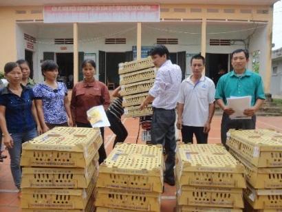 DABACO hỗ trợ 10.000 gà giống cho huyện Yên Thế