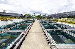 Điều kiện ATTP, sinh học và môi trường đối với cơ sở sản xuất giống thủy sản