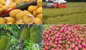 Chính sách hỗ trợ khi áp dụng Quy trình thực hành sản xuất nông nghiệp tốt (VietGAP)