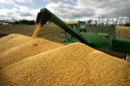 Cục Chăn nuôi chỉ định VinaCert là Tổ chức chứng nhận sự phù hợp chất lượng thức ăn chăn nuôi gia súc, gia cầm xuất khẩu, nhập khẩu