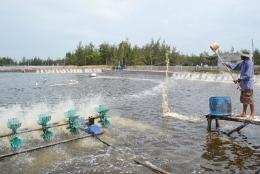 Quyết định số 4835/QĐ-BNN-TCTS về Hướng dẫn áp dụng VietGAP cho nuôi thương phẩm tôm nước lợ