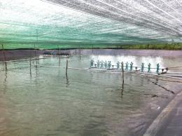 Điều kiện vệ sinh thú y đối với cơ sở sản xuất, kinh doanh thủy sản giống