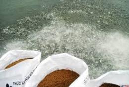Hợp chuẩn thức ăn thủy sản – Từ trách nhiệm đến lợi ích