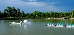 Quản lý sức khỏe thủy sản theo quy trình VietGAP