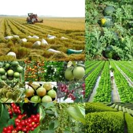 Cục Trồng trọt chỉ định VinaCert là tổ chức chứng nhận VietGAP trồng trọt