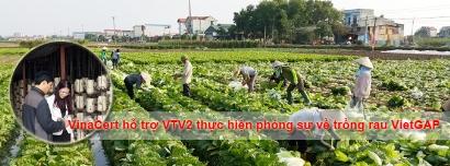 VinaCert phối hợp với VTV2 thực hiện phóng sự về rau VietGAP