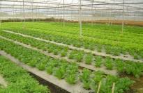 VietGAP trồng trọt