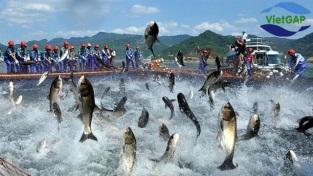 [Video] Chứng nhận VietGAP thủy sản