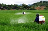 Lợi ích của chứng nhận hợp quy thuốc bảo vệ thực vật