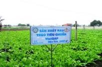 Lợi ích của chứng nhận VietGAP trồng trọt