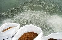 Chứng nhận hợp chuẩn thức ăn thủy sản