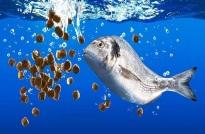 Chứng nhận hợp quy thức ăn thủy sản