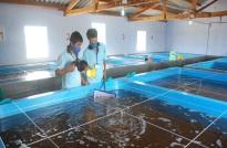Chứng nhận hợp quy cơ sở sản xuất, kinh doanh thủy sản giống
