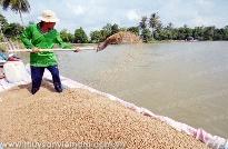 VinaCert cung cấp dịch vụ chứng nhận hợp chuẩn thức ăn thủy sản